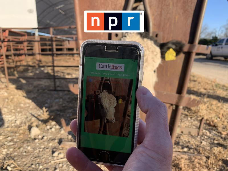 Researchers Develop An App To Identify Cattle Through Facial Recognition